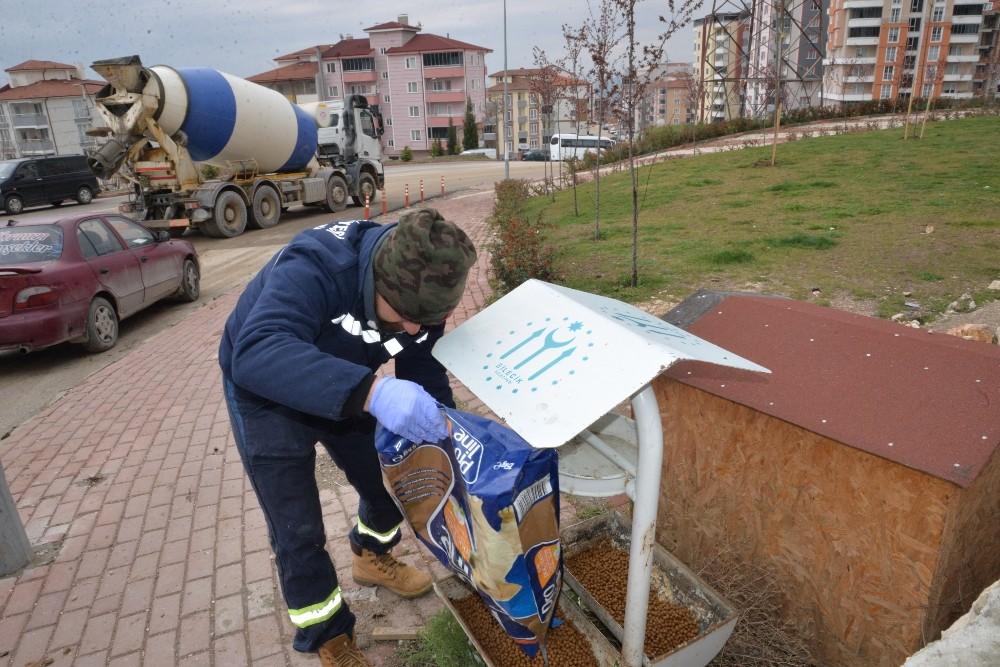 Bilecik Belediyesi sokak hayvanlarını unutmadı