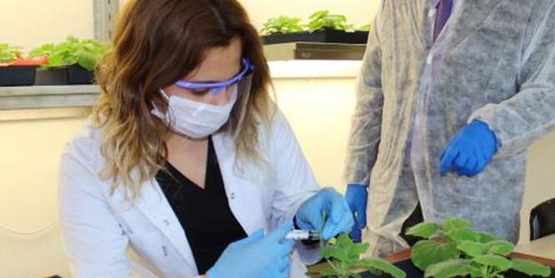 Bilim Kurulu Üyesi sıcak gelişmeyi dünyaya duyurdu! Koronavirüs ile mücadelede yeni sistem