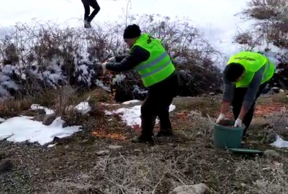 Bingöl'de yaban hayvanları için doğaya yem bırakıldı