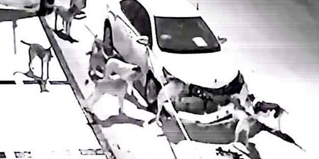 Bir köpek saldırısı daha! O marka arabalara mı saldırıyorlar?