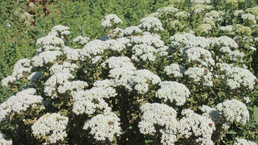 'Bitkilerin gücü ile sağlıklı yaşlanın'