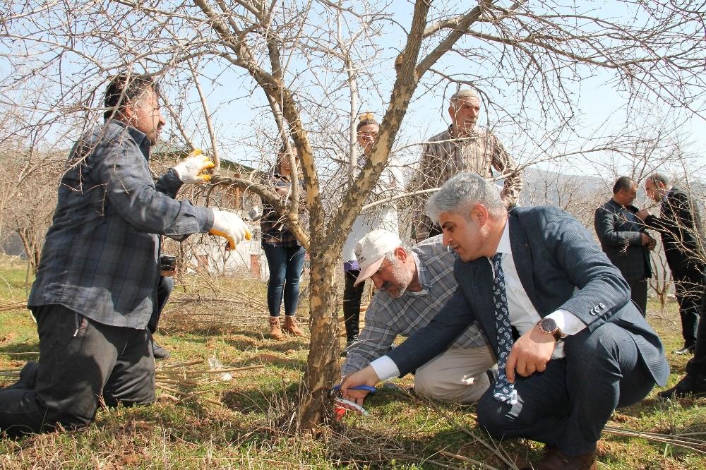 Bitlis ekonomisine katkı sunan nar ağacının budamasına başlanıldı