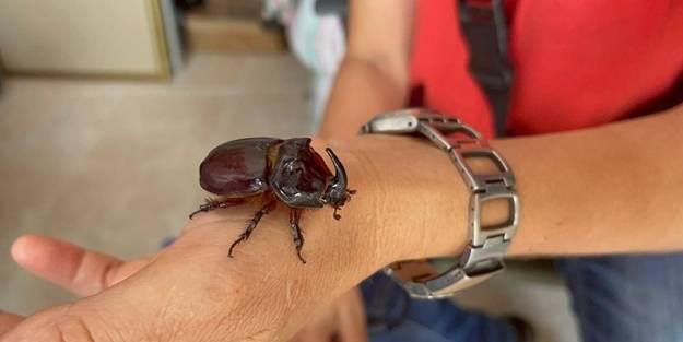 Böceğine gözü gibi bakıyor: 90 bin lira olduğu söyleniyor