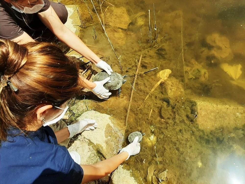 Bodrum'da 300 kaplumbağa için kurtarma operasyonu