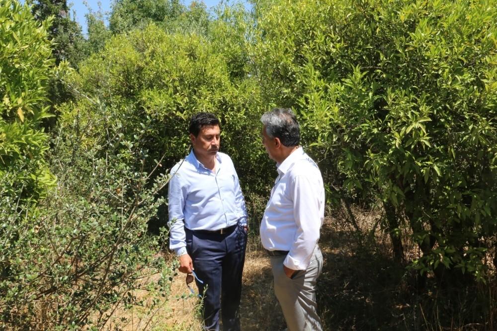 Bodrum'un mandalina bahçeleri turistik olacak