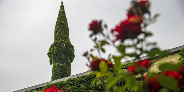 Botanik bahçesi gibi cami