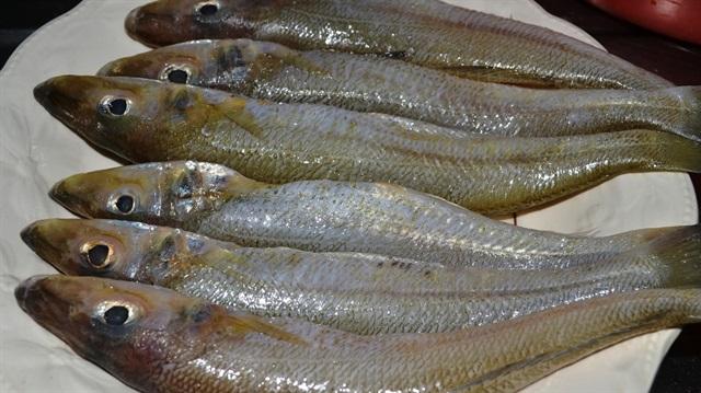 Bozkırın balığı Avrupa'da