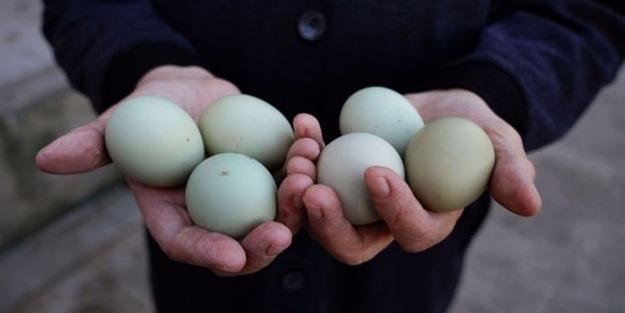Bu yumurtaların bir tanesi 10 lira