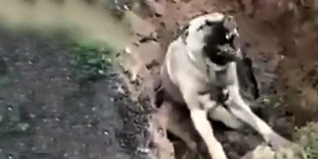Bunu yapan insan olamaz! Zehirlenen köpek can çekişerek öldü