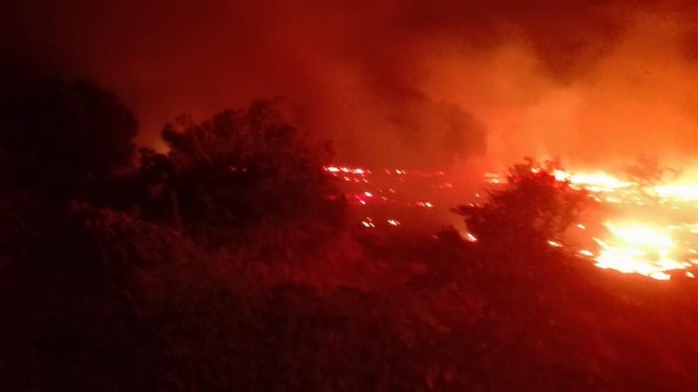 Burhaniye'de arazi yangınında mandalina ağaçları zarar gördü