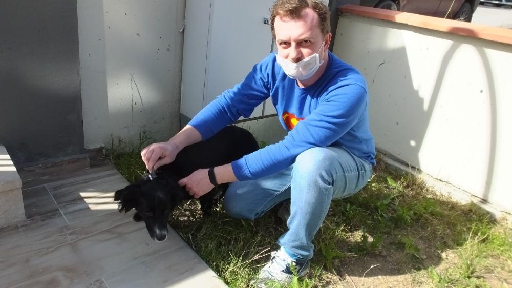 Burhaniye'de köpeklere aşı