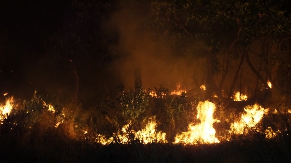 Burhaniye'de meydana gelen ot yangını mandalina bahçesini kül etti
