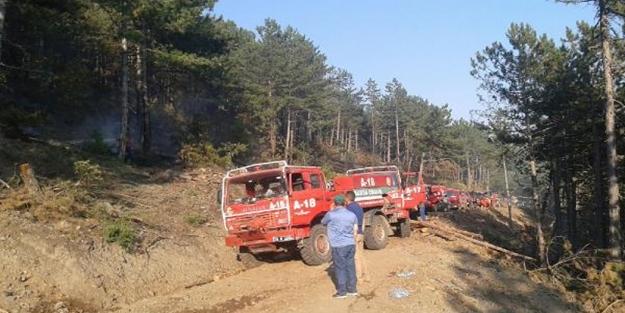 Bursa'da 5 hektar ormanlık alan yandı