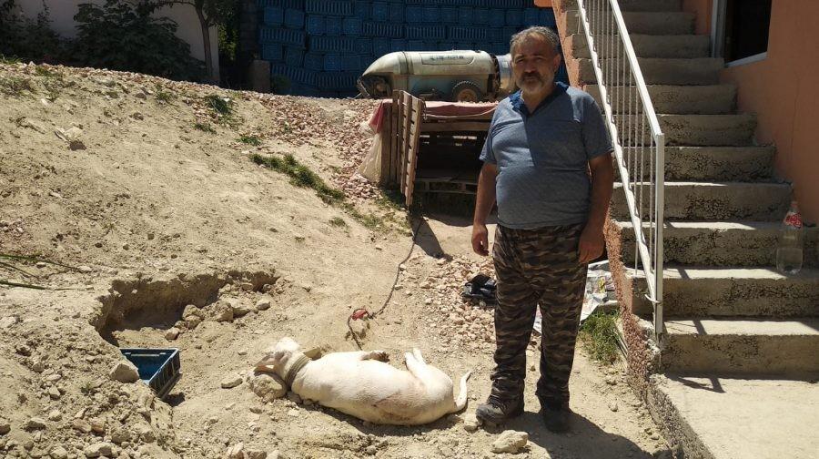 Bursa'da hamile köpeği
