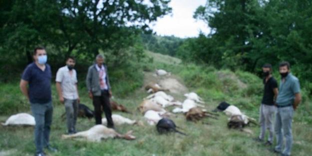 Bursa'da hayvan katliamı yapıldı!