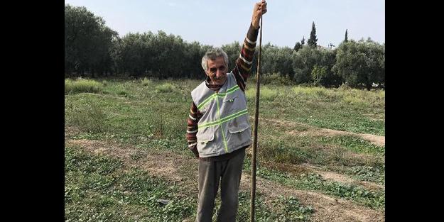 Bursa'da yaralı bulunan yılan veterinere götürüldü