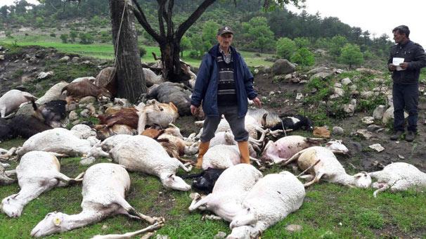 Bursa'da yıldırım düşmesi sonucu 52 küçükbaş hayvan telef oldu