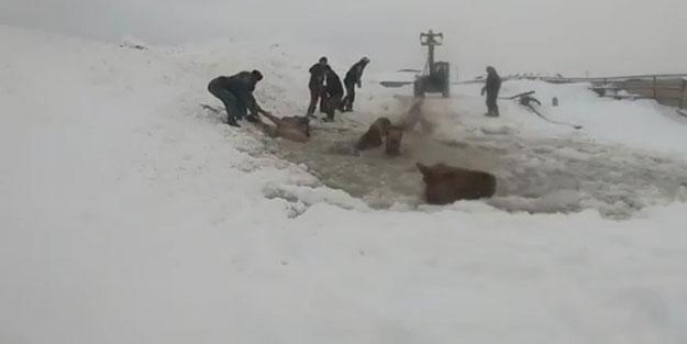 Buz bataklığında yaşam savaşı