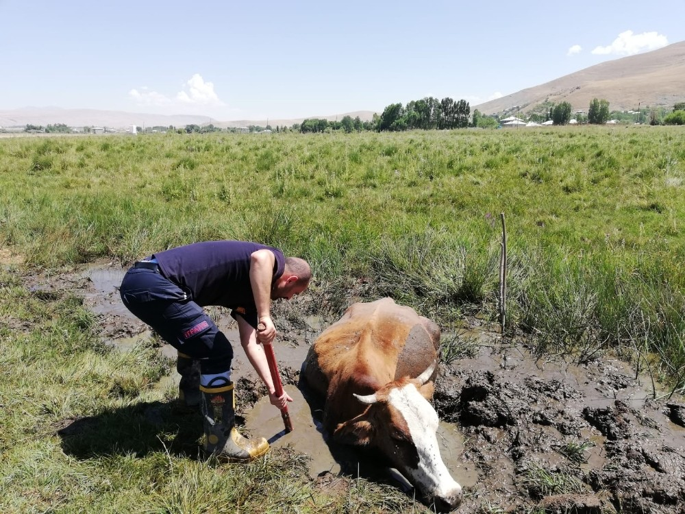 Çamura saplan inek itfaiye ekipleri tarafından kurtarıldı
