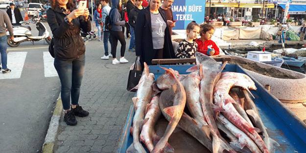 Çanakkale'de yakalanan köpek balıkları, Yunanistan'a satılacak