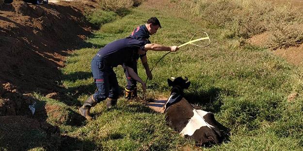 Çaresiz ineğin imdadına itfaiye ekipleri yetişti