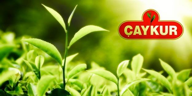 Çay İşletmeleri Genel Müdürlüğü sözleşmeli personel alım ilanı