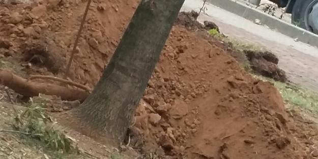 CHP'li Ataşehir Belediyesi ağaç katliamı yaptı
