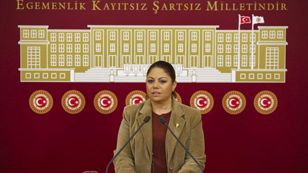 CHP'li Zeynep Altıok, hayvan hakları için harekete geçti