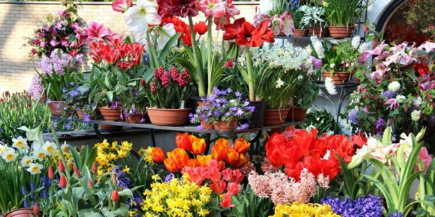 Çiçekler ne anlama geliyor?