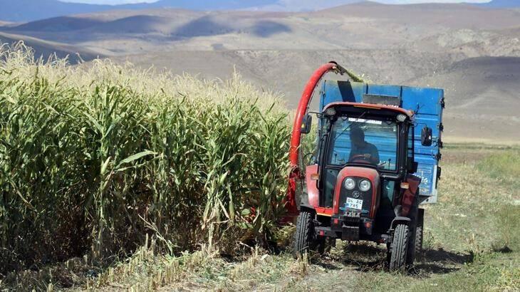 Çiftçiler devlet destekli silajlık mısırın hasadına başladı