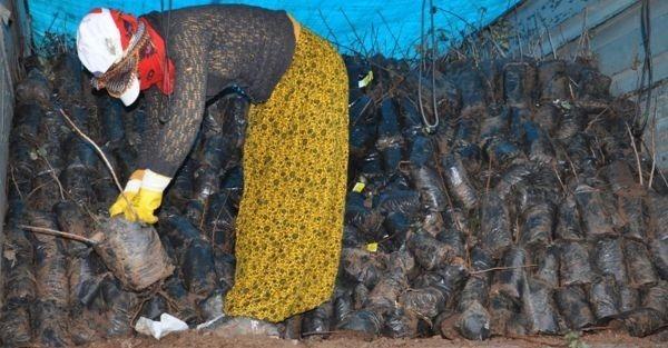 Çiftçilere 225 bin adet dağıtıldı