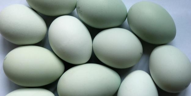 Çiğ yumurta zararlı mıdır? Çiğ yumurta yenir mi?
