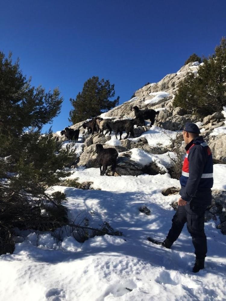 Çobanın kaybettiği sürüyü jandarma drone ile buldu