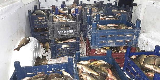 Yüzlerce kilogram balığa el konuldu, 10 bin TL ceza kesildi