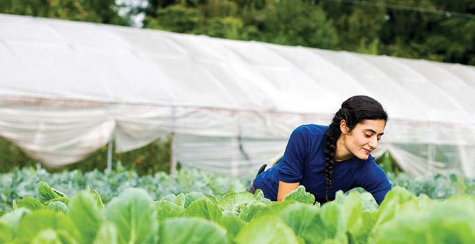 Desteği duyan genç çiftçi başvuruya koştu