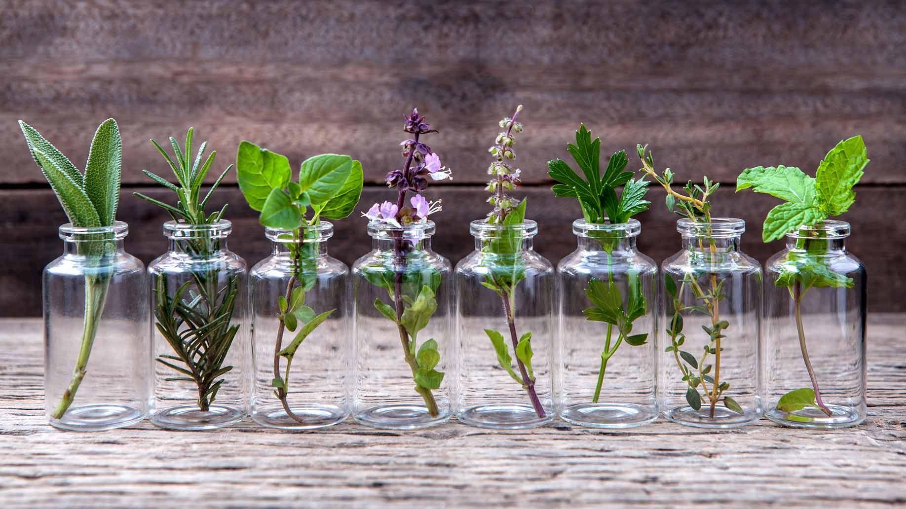 Doğadan gelen ağrı kesiciler: Bitkiler ve yağları