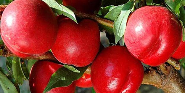 Doğal ağrı kesici nektarinin 7 mucizevi faydası!
