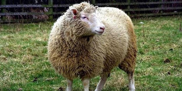 Dolly'yi klonlayan bilim insanları koronavirüs gelişmesini dünyaya duyurdu