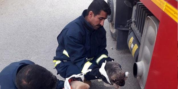 Donmak üzere olan köpek yavrularını itfaiye kurtardı