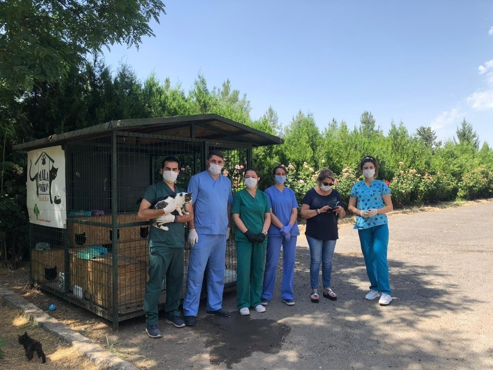 DÜ kampüsünde yaşayan hayvanlara aşı yapıldı