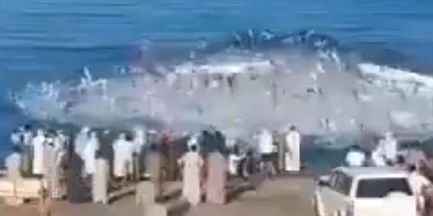Dünya gündemine oturan görüntüler! Balıklar, balıkçılara saldırdı, ölüler var