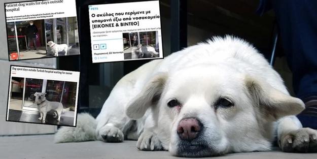 Dünya Trabzon'daki bu köpeği konuşuyor!