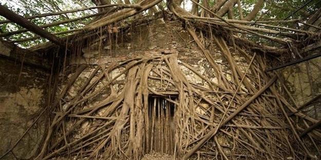 Dünyanın en ilginç ağacı - FOTO