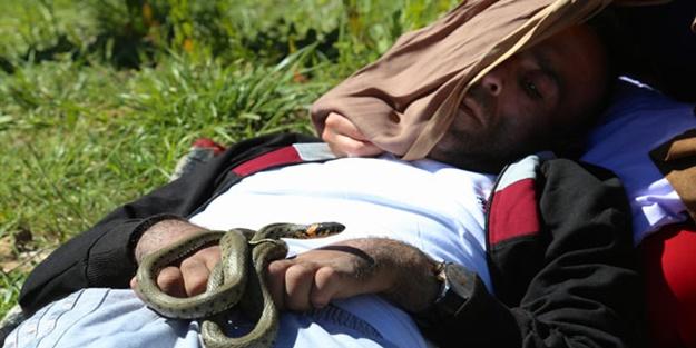 Duyan geliyor... Bu yılanlar zehir değil, şifa saçıyor!