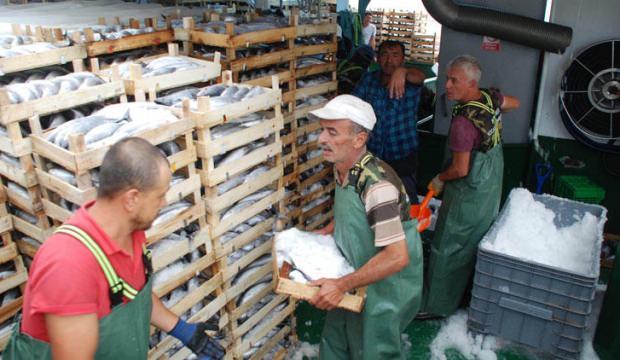 Düzce'de tek seferde 30 ton palamutla döndü