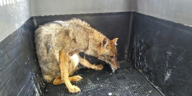 Tedavi edilen yaban hayvanları doğaya salındı