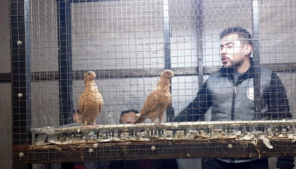 Egeli Güvercin Yetiştiricileri Nazilli'deki Mezatta Buluştu