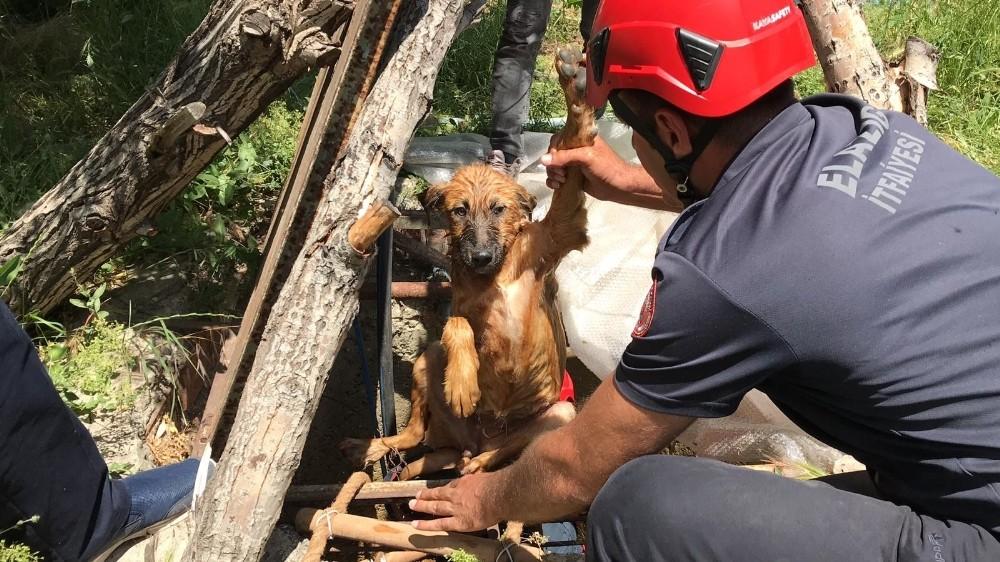 Elazığ'da 5 metrelik kuyuya düşen köpek için kurtarma operasyonu