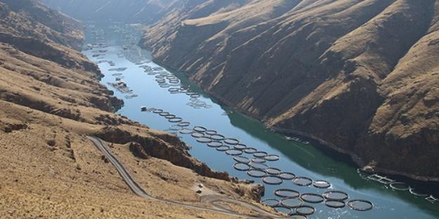 Elazığ'da üretilen somon ve alabalıklar dünyanın birçok ülkesine ihraç ediliyor