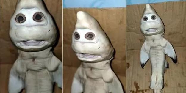 Endonezya'da insan yüzlü köpek balığı şoke etti!